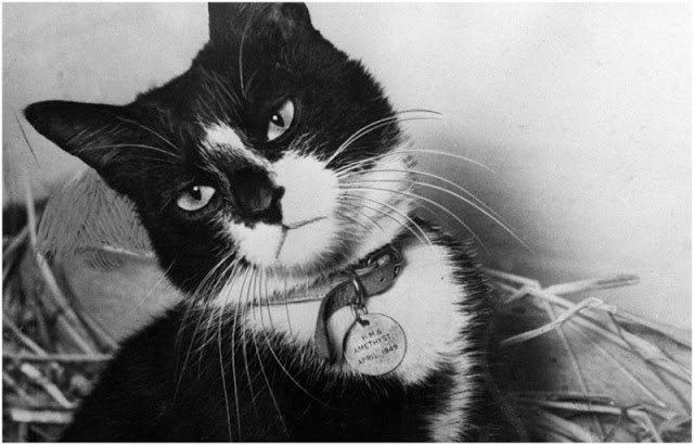 Histórias de Guerra: O gato Simon - Zheit - Entreternimento e ...